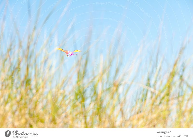 dune dragon Playing Hang gliding Summer Beach Flying Blue Multicoloured Yellow Green Kite Toys Wind chime Floating Sky Sky blue Beach dune Marram grass