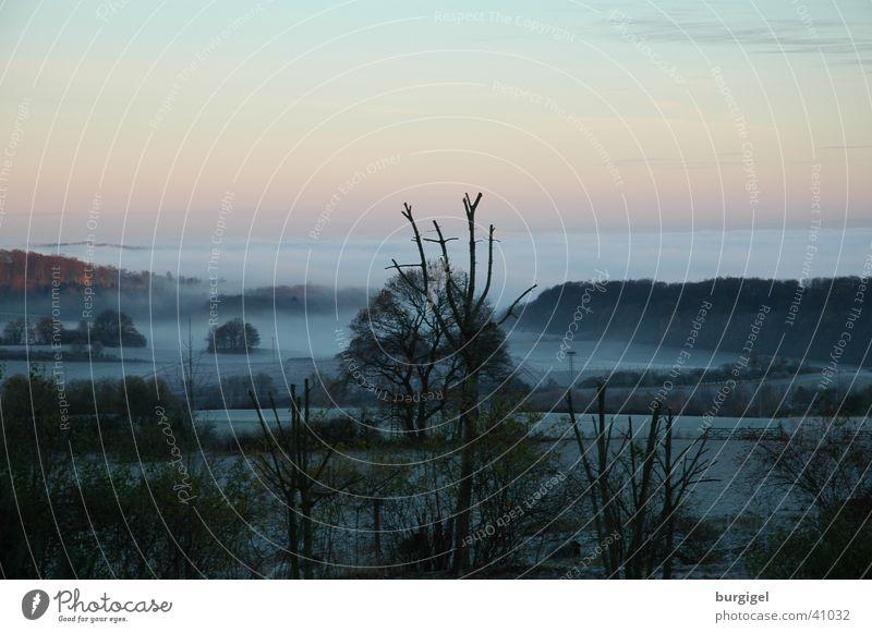 Sky Tree Mountain Landscape Fog Valley