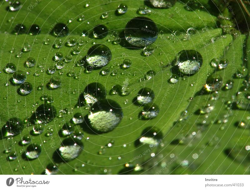 Water Leaf Rain Drops of water