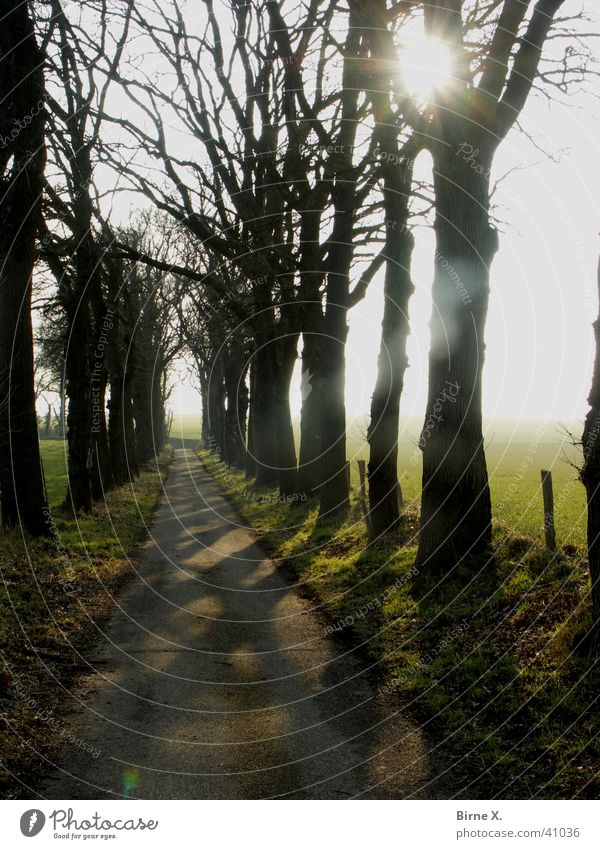 Nature Tree Sun Winter Street Forest Meadow Lanes & trails Landscape Glittering Hiking Branch Footpath Fence Twig Avenue