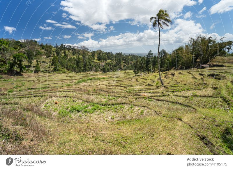 Green stepped fields against small village on hill cultivated agriculture terrace plantation farmland rural industry province horizon nature east timor country