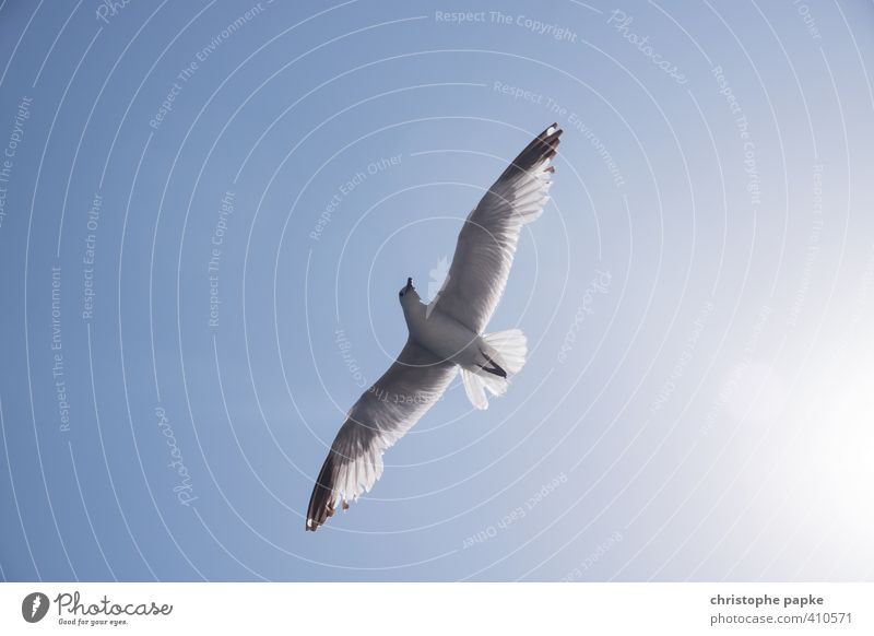 freedom Vacation & Travel Freedom Summer vacation Sun Beach Air Sky Cloudless sky Animal Wild animal Bird Wing Seagull 1 Observe Flying Esthetic Feather Plumed