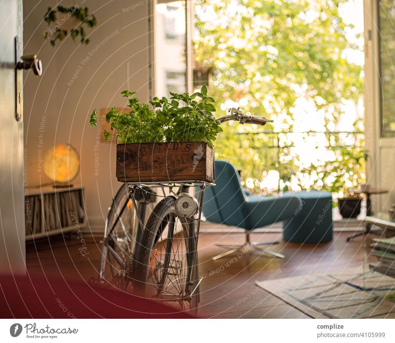Wooden box with herbs on a bicycle in the living room Sunbeam Sunlight Day Gardening Basil Bicycle Sustainability Transport Town Cycling Living or residing
