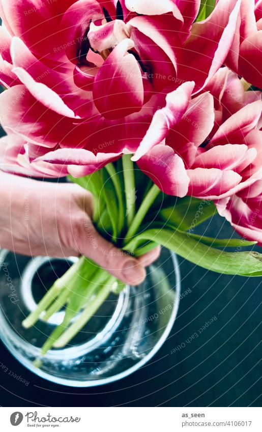 Put tulips in the vase double tulip Green Gray Anthracite Hand Water Vase Decoration pink White Tulip Spring Bouquet Blossom Flower Plant Interior shot Nature