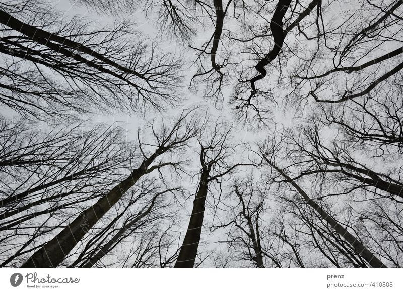 worm's-eye view Environment Nature Plant Winter Tree Gray Black Branch Skyward Wide angle Colour photo Exterior shot Day Deep depth of field Worm's-eye view