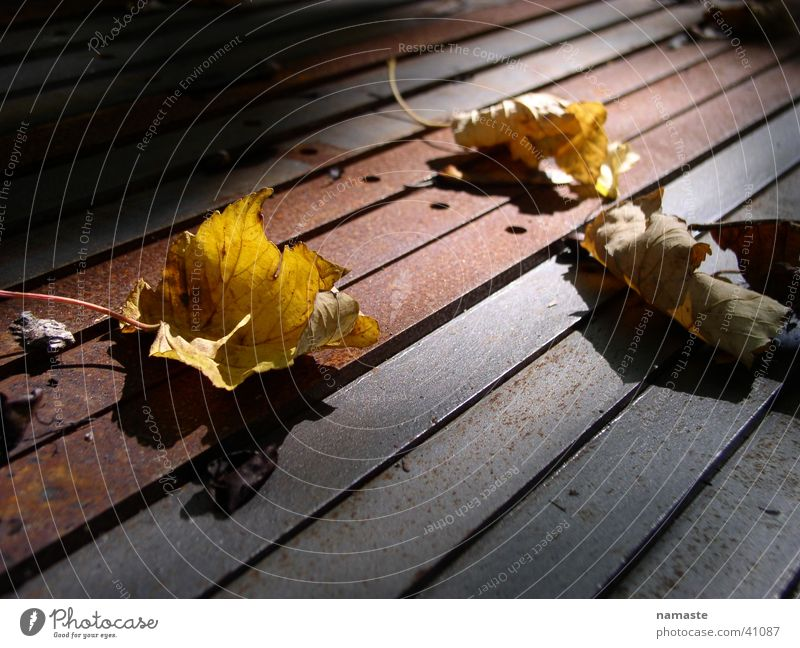 transience Autumn Leaf Transience Rust light atmosphere
