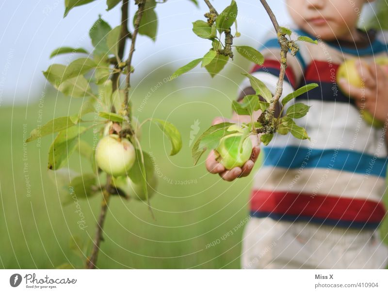 Human being Child Autumn Eating Healthy Garden Food Fruit Infancy Fresh Nutrition Sweet Branch Apple Harvest Toddler