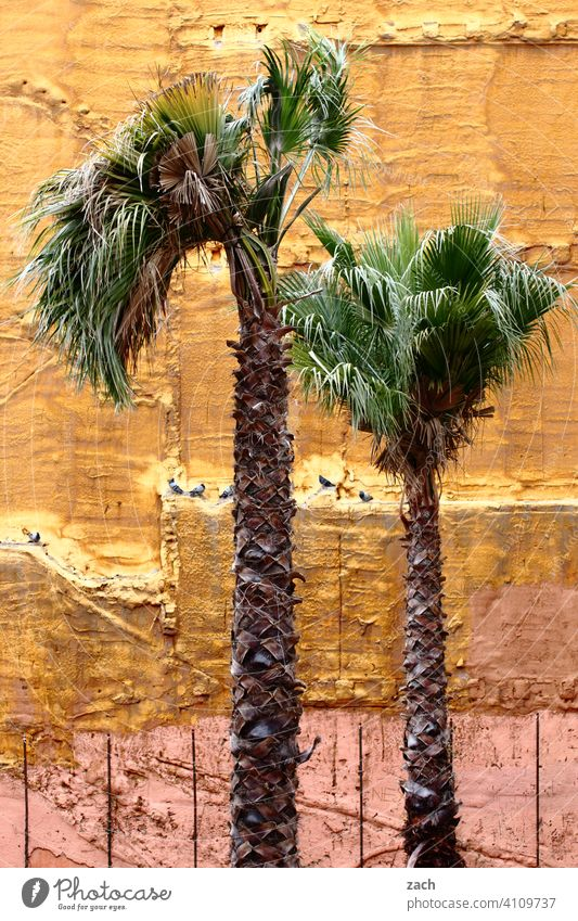 on the palm of one's hand Palm tree palms palm branches House (Residential Structure) Ruin Facade Wall (building) Yellow Town Fire wall