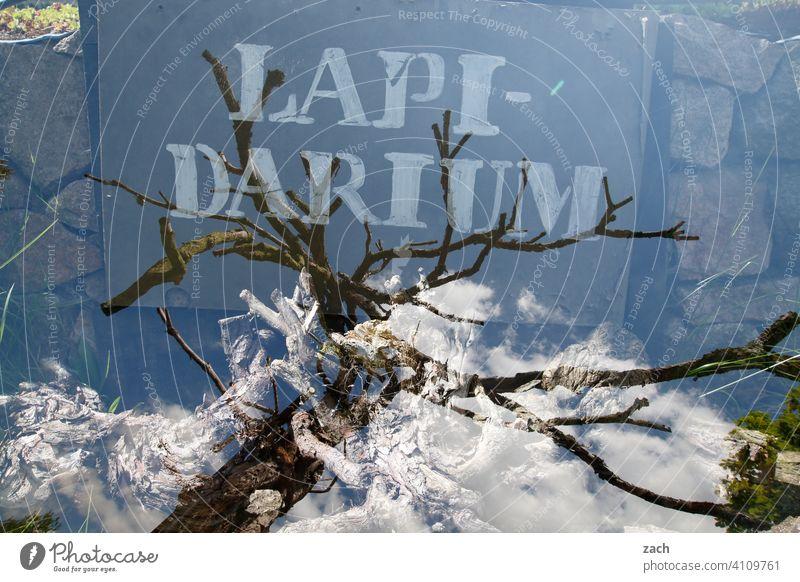 Lirum larum Double exposure Tree Sky Clouds Blue Gray Stone lapidarum Nature Wall (barrier)