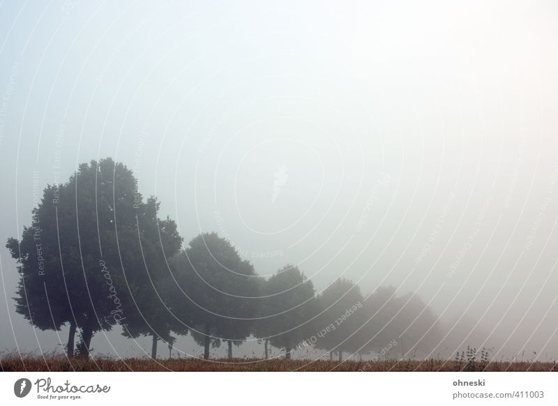 nebulous Fog Dawn trees Avenue cryptic Mysterious Grief Loneliness Life Hope