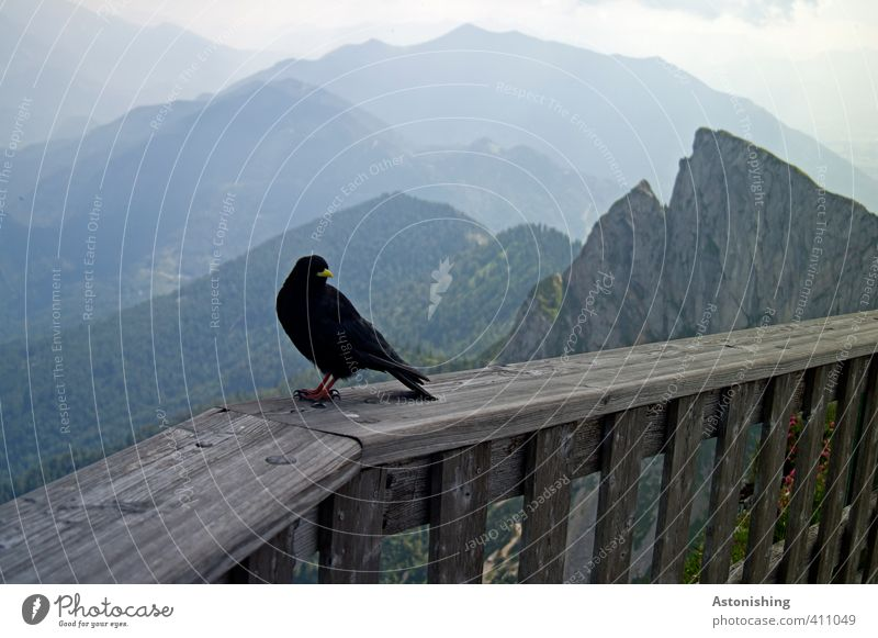 Bird on the mountain Environment Nature Landscape Air Sky Clouds Horizon Summer Weather Beautiful weather Forest Rock Alps Mountain sheep's mountain Peak