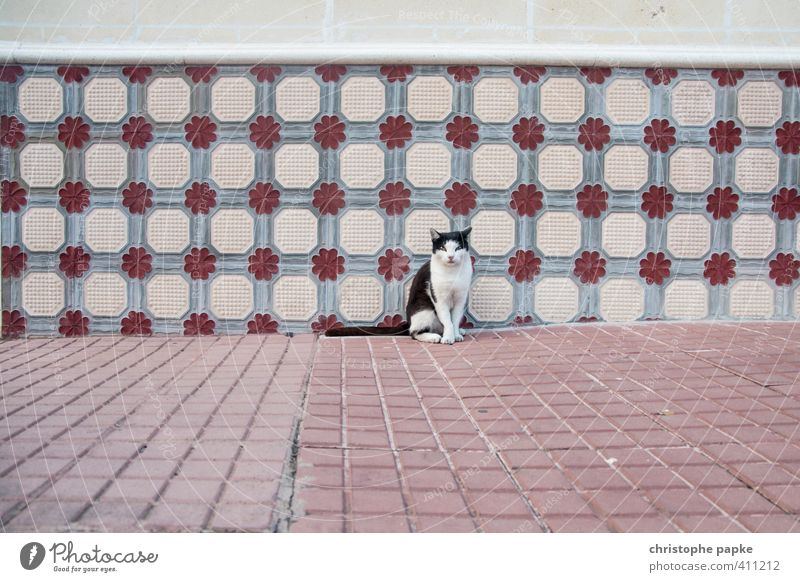 Cat Animal Wall (building) Wall (barrier) Facade Sit Cute Observe Curiosity Tile Pet