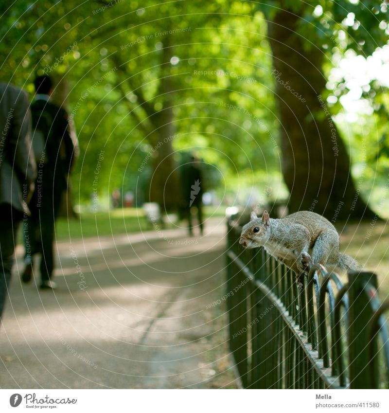 Nature City Tree Landscape Animal Environment Lanes & trails Metal Park Sit Wild animal Free Cute Curiosity Fence Near
