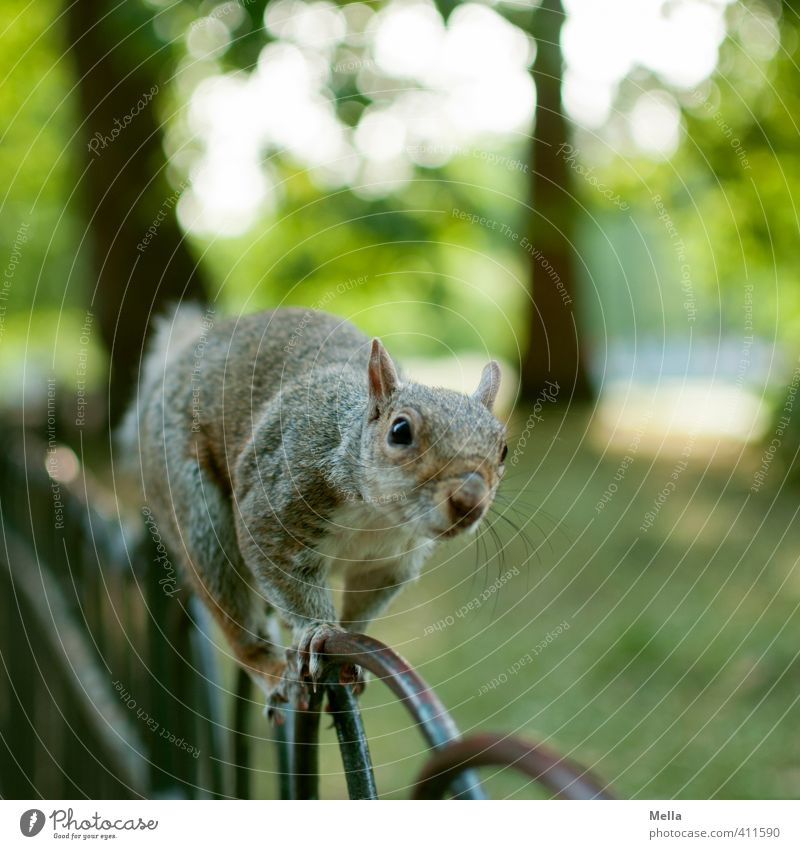 Nature Plant Summer Tree Landscape Animal Environment Natural Metal Park Wild animal Free Cute Curiosity Fence Near