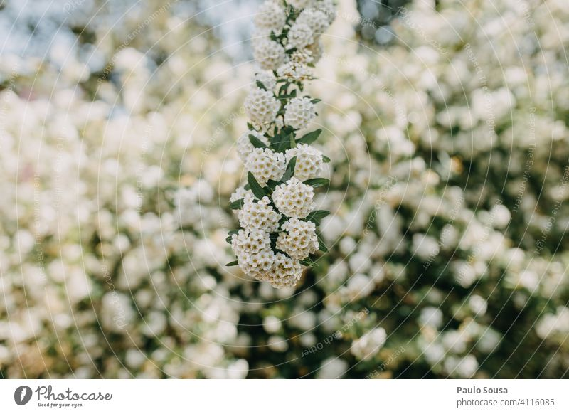 Spring flowers Flower Blossom Blossoming background daylight Neutral Background natural light naturally Natural color blossom Plant Nature Park petals Delicate