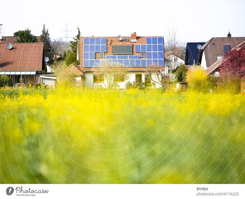 Single-family house with photovoltaic system and thermal solar system on the roof next to a blooming rape field photovoltaics Detached house Renewable energy