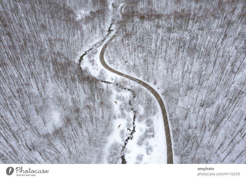 Mountain Road Meandering Stream Deer and Roe Deers forest stream deer roe roedeer hind animals wild three road river mountain oak beech pines aerial drone view