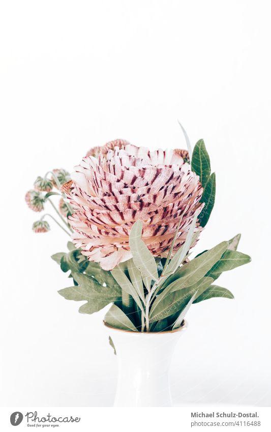 pink ranunculus in white vase Flower Plant Ornamental plant pretty Calm flower schedules calm quiet Green green silent Still Life decoration interior Neutral