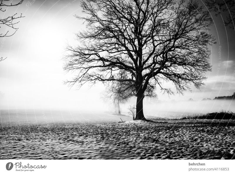 hibernation Shadow Mystic Mysterious idyllically Dreamily pretty Exterior shot Climate Fog Snow layer Agriculture Tree trunk Branches and twigs