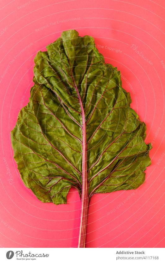 Beetroot leave on pink background vegetable healthy composition fresh ripe beetroot leaf colorful bright half green vibrant vegan natural plant ingredient diet