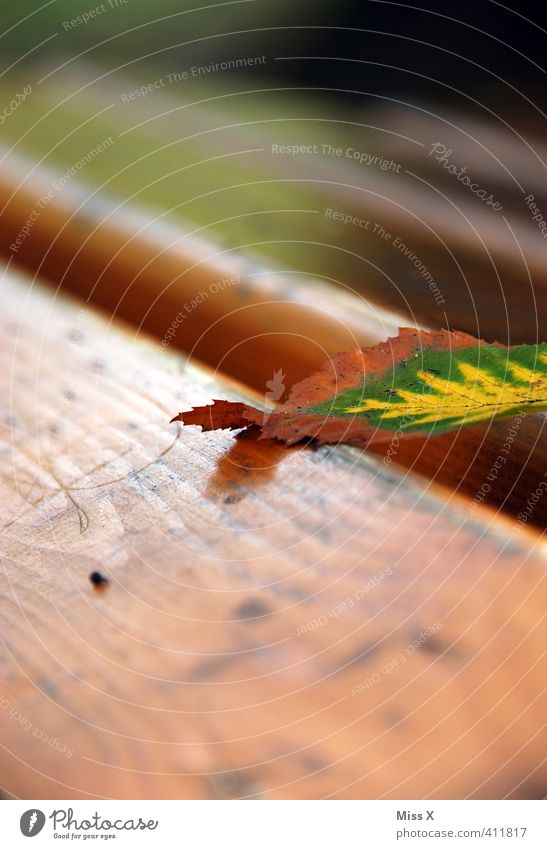 A Bladl Autumn Leaf To dry up Autumn leaves Beech leaf Autumnal colours Park bench Wooden board Early fall Lie Colour photo Exterior shot Close-up Detail