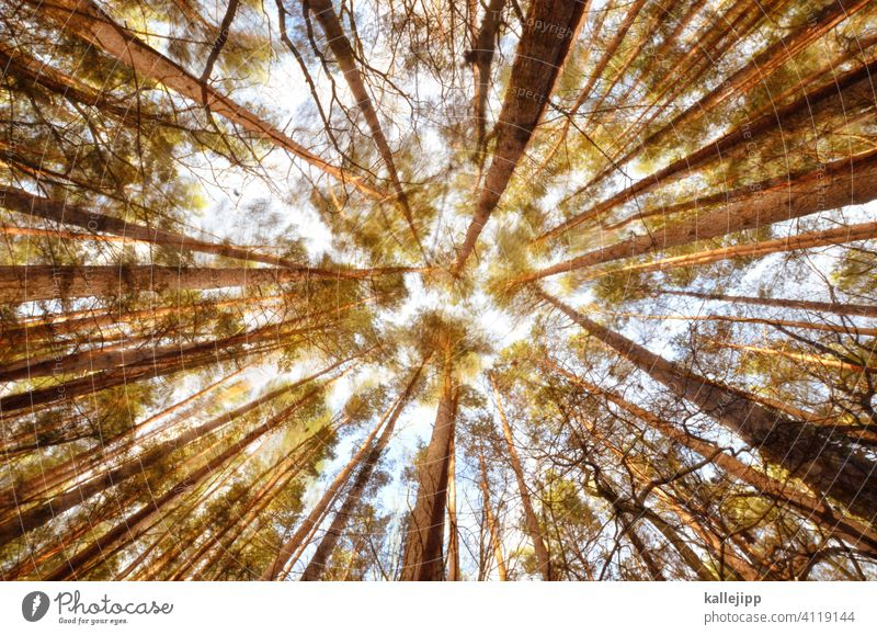 rustling forest Forest trees Movement motion blur Tree trunk Worm's-eye view Wobble Jawbone tight clearing Nature Exterior shot Green Colour photo Environment
