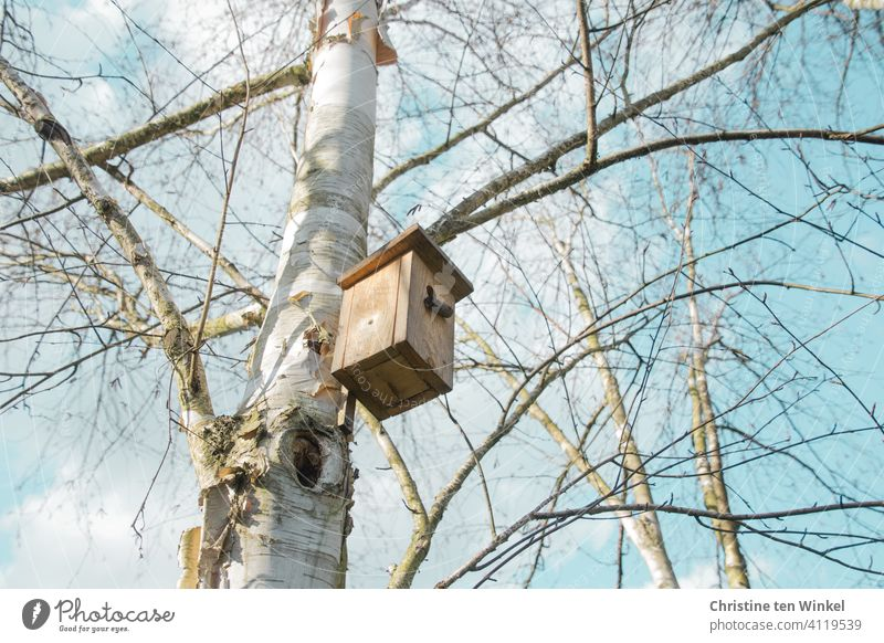 Nesting box for tits on a still bare birch tree. View from below into bare branches and pale blue, slightly cloudy sky. meisenkasten birches bare trees Blue sky