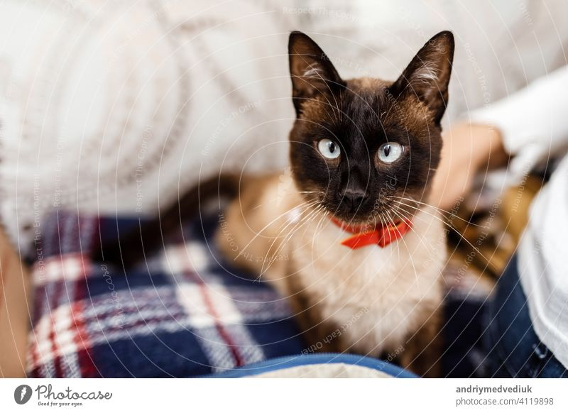 Funny cat with a red bow tie close-up. cat with butterfly. cat with eye defect. The concept of fashionable cats. animal kitten kitty cute portrait funny