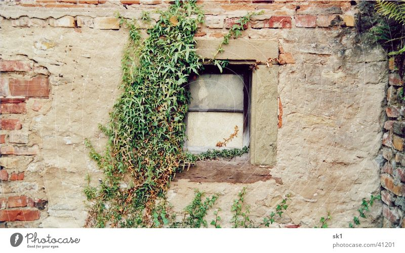Old Green House (Residential Structure) Wall (building) Window Wall (barrier) Things Brick Tendril