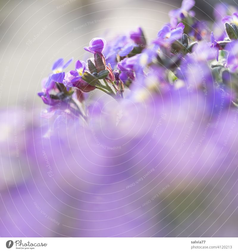 purple flowers with a lot of blur Violet Nature pink Blossoming Flower Spring Garden Shallow depth of field Summer Plant blurriness Fragrance Copy Space bottom