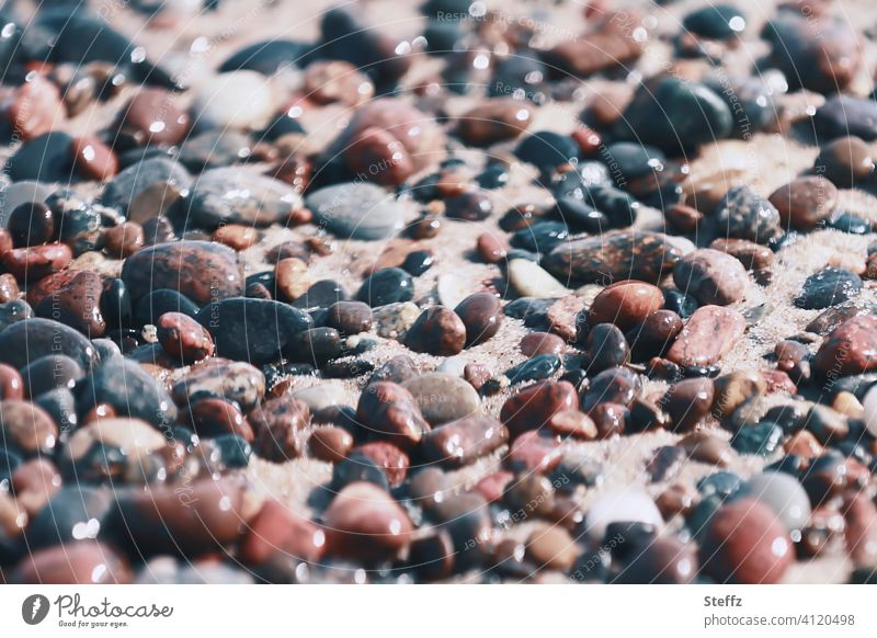 Stones on the beach of the Baltic Sea on a beautiful spring day Baltic beach stones Sunlight Pebble beach Beach Sand beige tones Brown tones Baltic Sea holiday