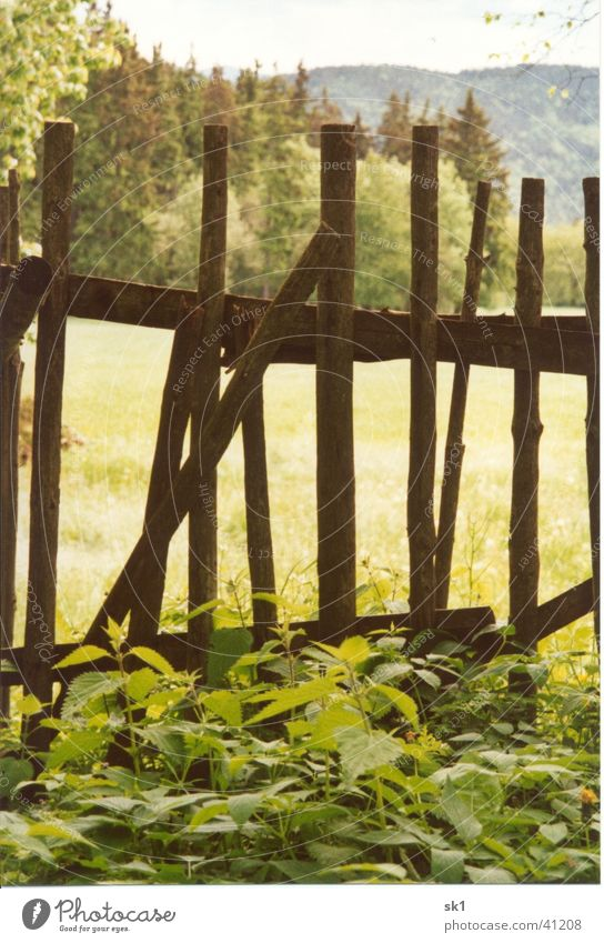 At the old old fence Fence Brown Wood Green Stinging nettle Things Old Meadow Trees Nature Weed