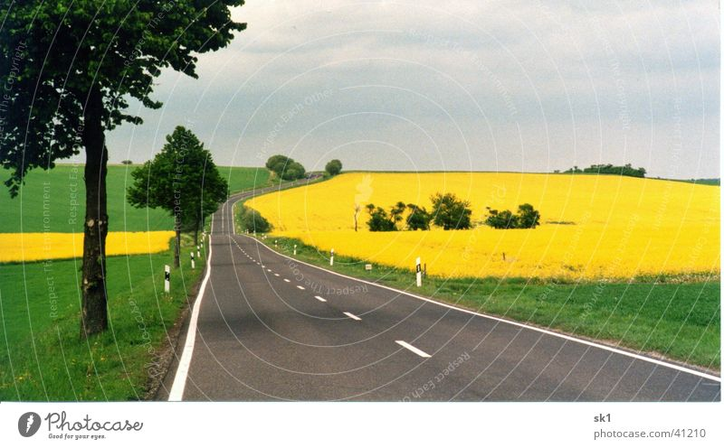 Country road with rape fields Canola Grass Meadow Yellow Green Field Tree Blossom Mountain Street Blue Nature Landscape Sky Line without car Colour