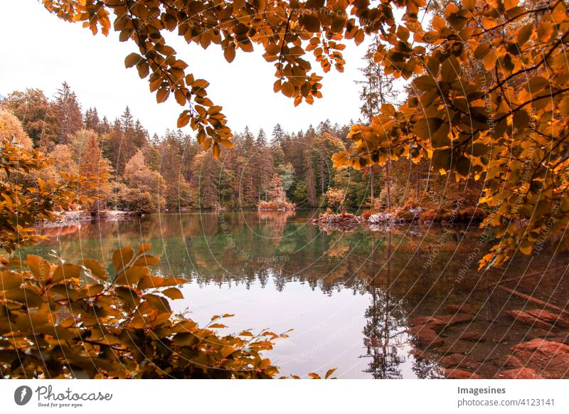 Reflections in calm pond water on an autumn day. autumn idyllic landscape scene reflection Calm Pond Autumnal idyllically Landscape scene color picture