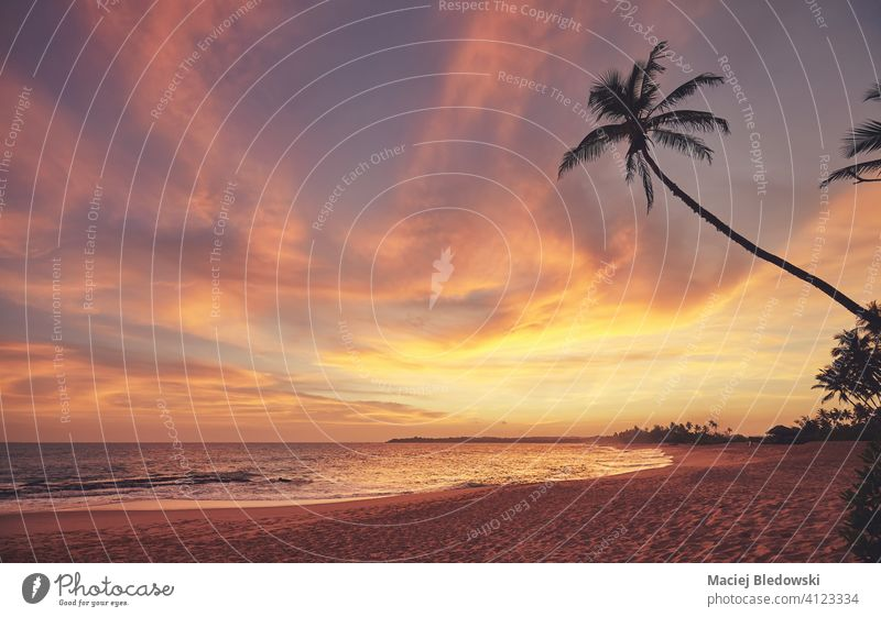 Tropical beach at a beautiful colorful sunset, Sri Lanka. paradise palm coconut sand summer travel nature water sea golden ocean island tree holiday tropical