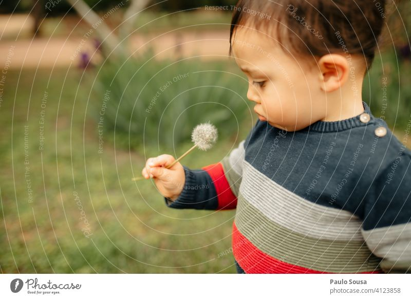 Cute child looking at dandelion Child Caucasian 1 - 3 years Dandelion Nature Natural Spring Happy Toddler Colour photo Exterior shot Infancy Human being Day