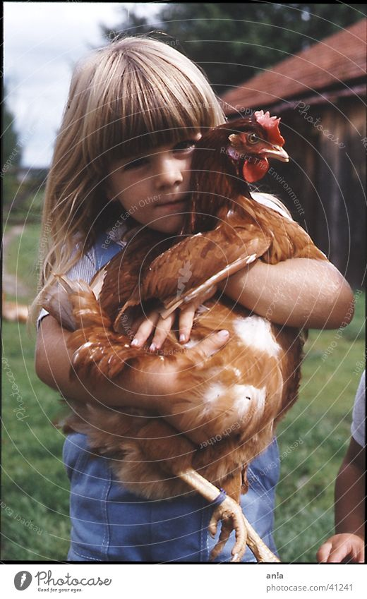 Child Girl Farm Catch To hold on Barn fowl Carrying Cuddling Trophy