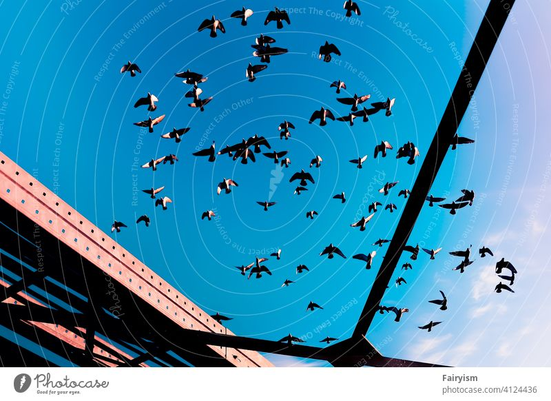 the sky with many pigeons flying Environment Evening Sunrise Beautiful weather Sky Weather Twilight Clouds backgrounds Background picture Beauty of nature
