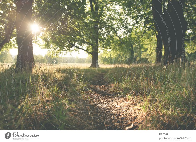 Nature Beautiful Green Plant Summer Sun Tree Landscape Calm Environment Warmth Grass Lanes & trails Natural Moody Park
