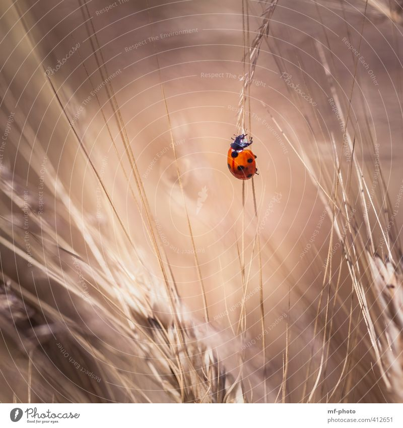 STEEPLY UPWARDS Beetle Ladybird 1 Animal Brown Red Happy Colour photo Exterior shot Deserted Light