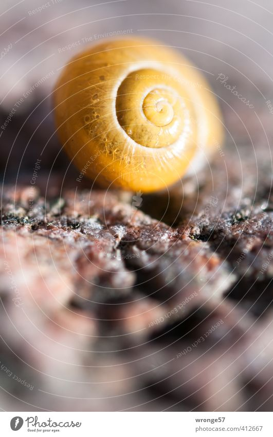The yellow house Nature Animal Sand Wild animal Snail Snail shell 1 Line Feminine Brown Yellow Spiral Close-up Macro (Extreme close-up) Detail Colour photo