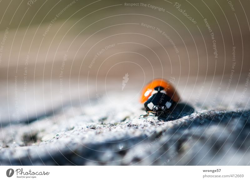 Nature White Summer Red Animal Black Small Brown Wild animal Insect Beetle Crawl Ladybird Diminutive