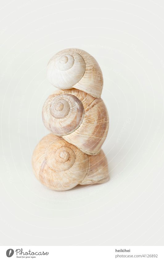 Three piled up snail shells Crumpet Snail shell Animal Macro (Extreme close-up) Close-up Nature Slowly Slimy Mollusk Speed Spiral House (Residential Structure)