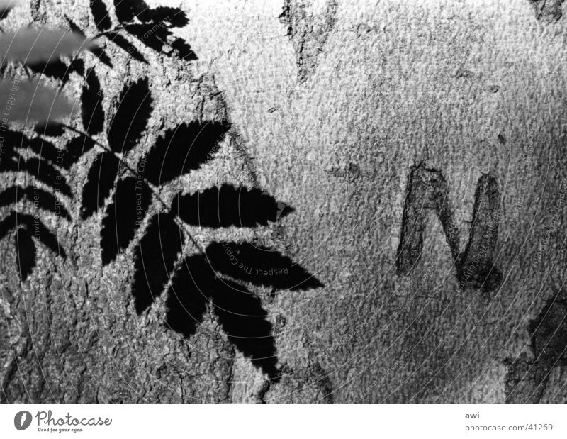 Eternal Love Tree Tree bark Leaf Macro (Extreme close-up) Light Loyalty initial N Black & white photo Shadow