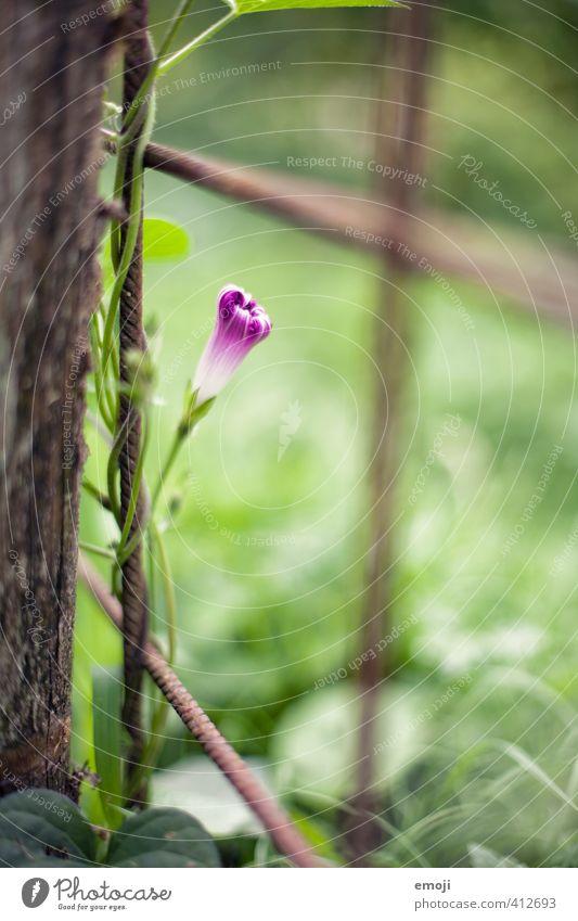 Nature Green Plant Flower Environment Natural Garden Violet