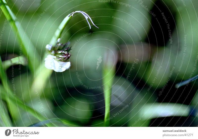 macrograss Grass Blossom Near Green Nature