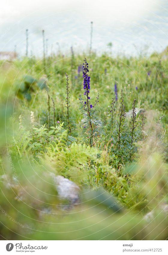 Nature Green Plant Landscape Flower Environment Natural Bushes Violet