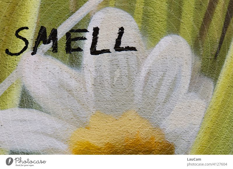 """Graffiti of a white-yellow flower with the lettering """"smell"""". Flower sniff mural painting street art house wall Yellow White Green Facade Wall (barrier)"""