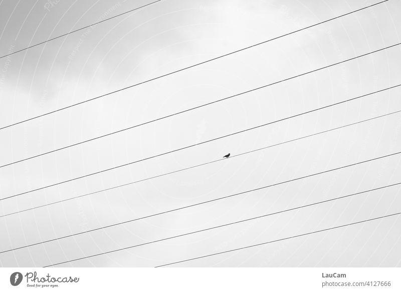 Lone bird on the tightrope Bird solitary bird Nature birds Sky Freedom stream Power transmission Energy Overhead line High voltage power line high voltage
