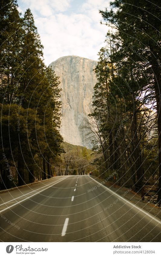 Road through forest with mountain views road asphalt valley tree nature trip range highway freedom road trip roadside summer plant wild scenic travel tall